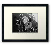 Thistles and Silk Framed Print