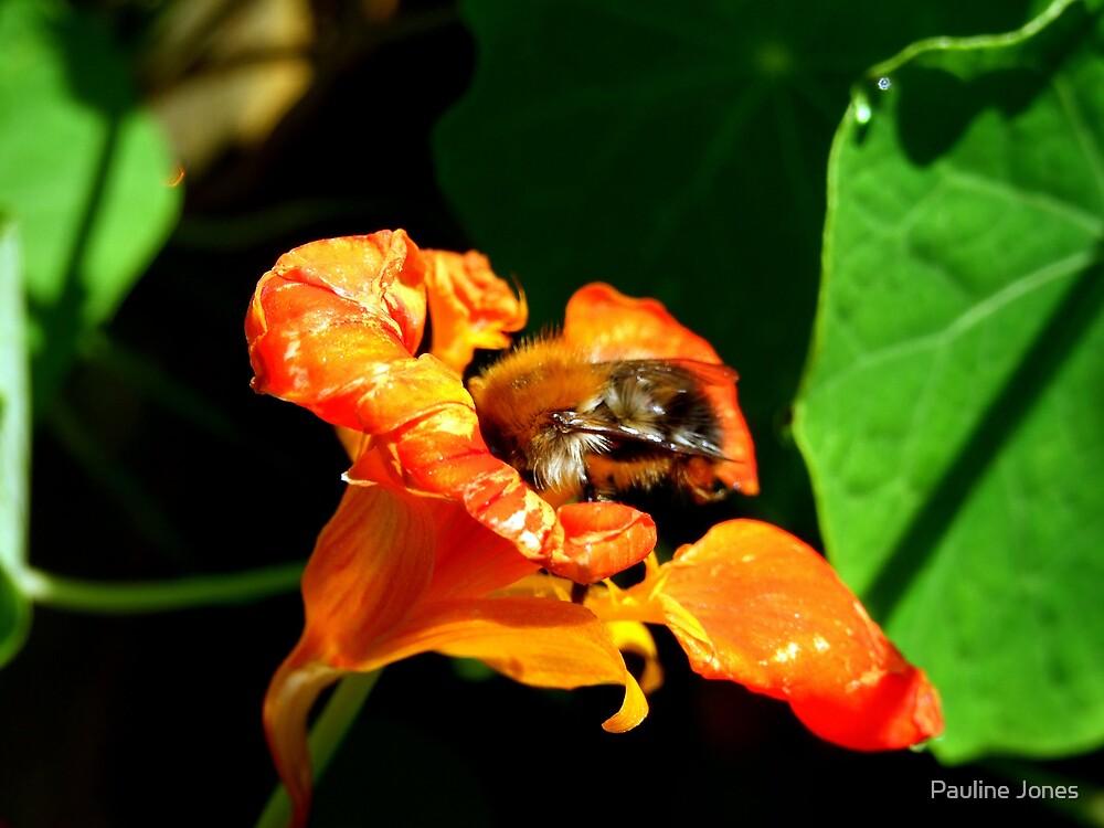 Bee in a nasturtium by Pauline Jones