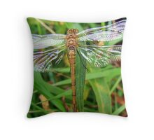 Dragonfly Sympetrum Striolatum. Throw Pillow