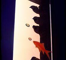 Birds 'n' Fish by LeDormeurDuVol