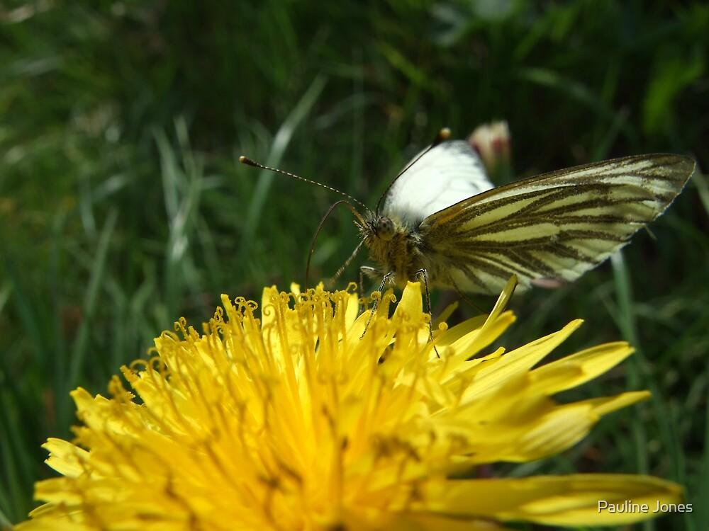Green Veined White Butterfly by Pauline Jones