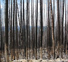 Burned Spires by Mark Powell