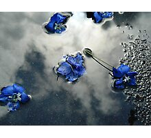 Fallen Delphiniums - Series 2 Photographic Print