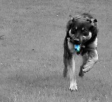 ASTHMATIC DOG by Stevie Toye