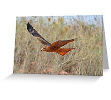 Black Kite ~ Under the Radar Greeting Card