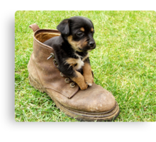 Too Small For Your Boots! Canvas Print