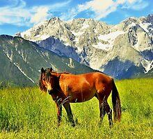 Horse in the Alps by Elzbieta Fazel