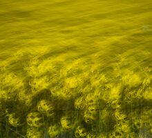 Quantong, Australia by Michelle McFarlane