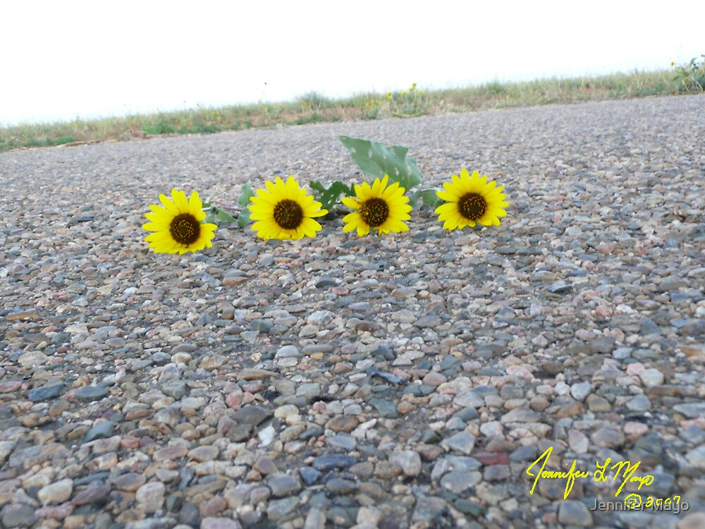 Sunflower Suicide by Jennifer Mayo