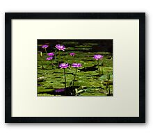 Waterlilies at Mt. Coot-tha Framed Print