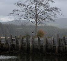 Willapa Bay Foggy Afternoon by Maria A. Barnowl