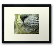 cat's muzzle Framed Print