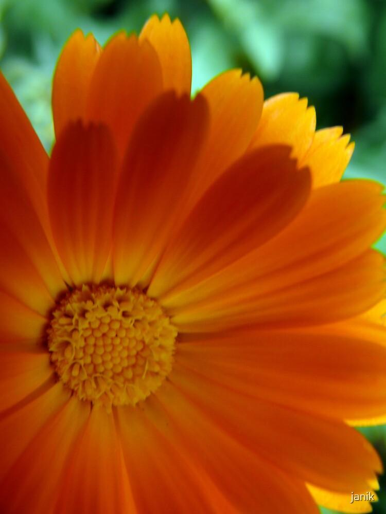 flower by janik