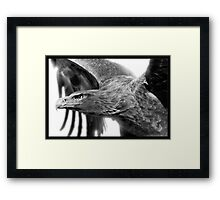 Wedge-tailed Eagle : Aquila audax Framed Print