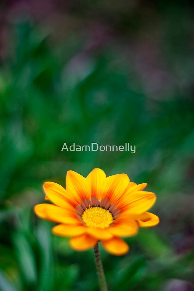Spring by AdamDonnelly