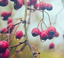Wet red berries by Vicki Field