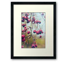 Wet red berries Framed Print