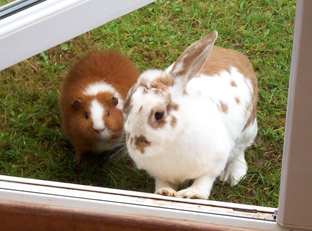 cute rabbit & guinea pig by louise158