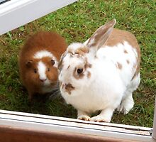 cute rabbit & guinea pig by louise158