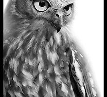 Barking Owl : Ninox connivens by WildLensPress