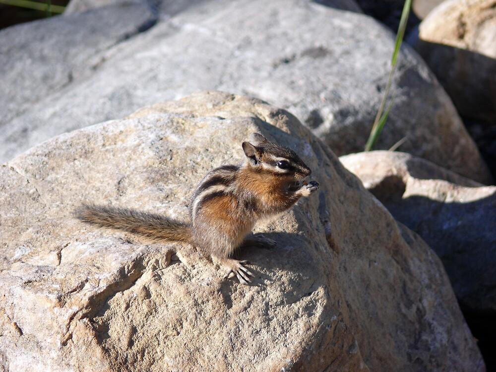 Squirrel Eats by Josh Meggs