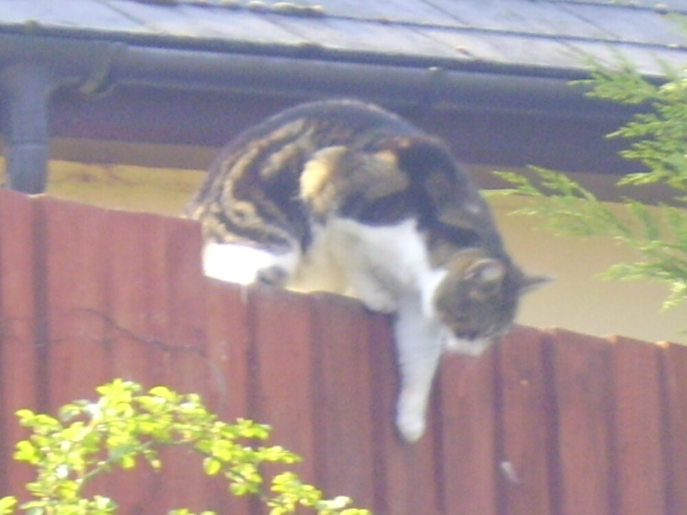 climbing cat by louise158
