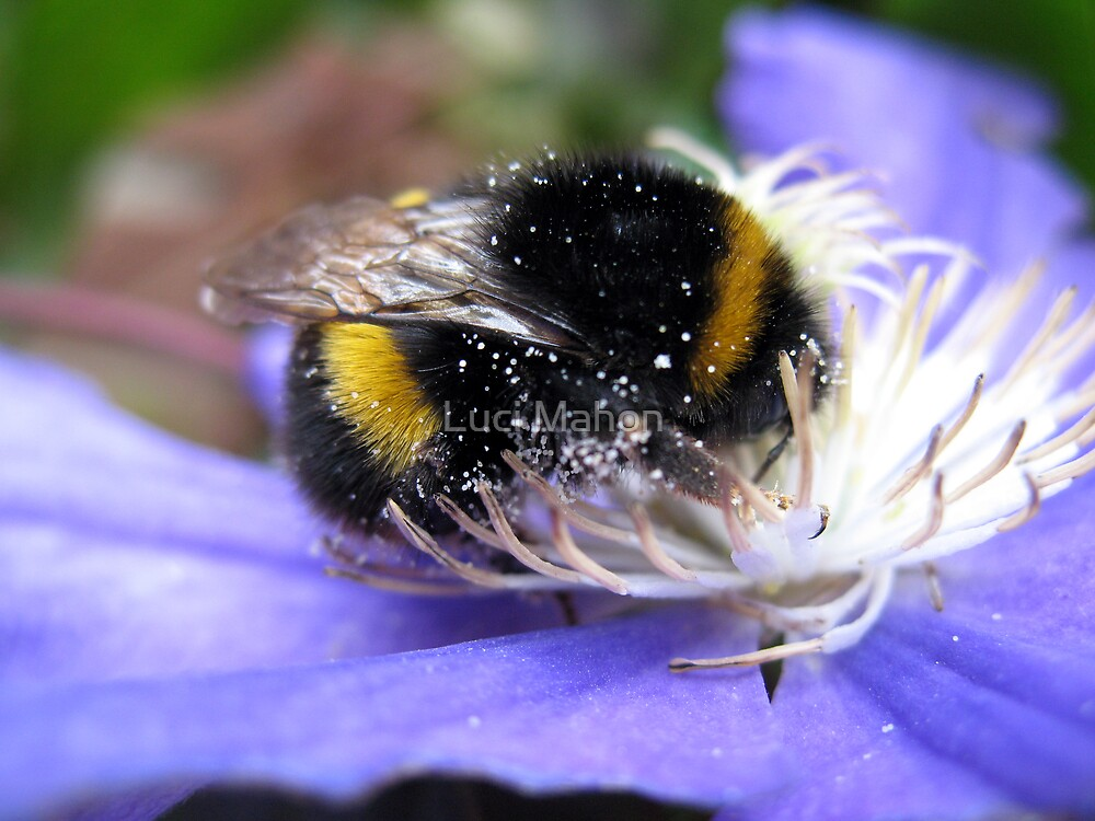 Bumblebee by Luci Mahon