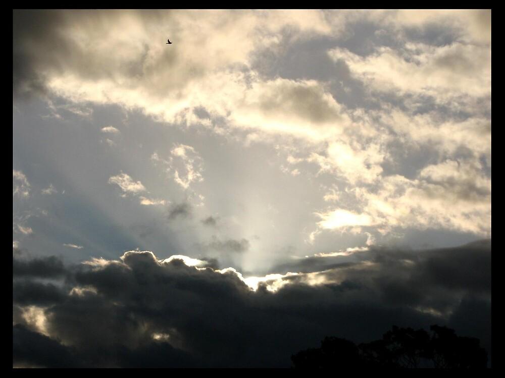 Sky by Melissa  Carroll