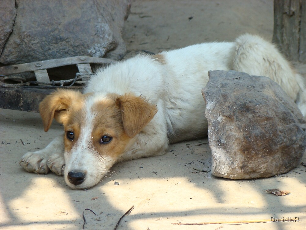 Dog in Zambia by DanielleR