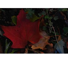 Auburn Autumn Photographic Print