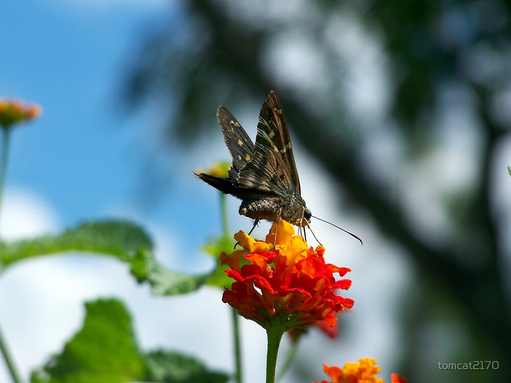 butterfly critter by tomcat2170