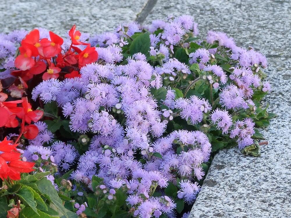 flowers4 by matjenkins