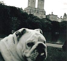 Dakota New York City by Naddl