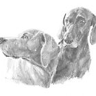 wiemaraner dog friends drawing by Mike Theuer