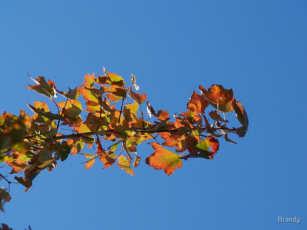 Fall Found by Brandy