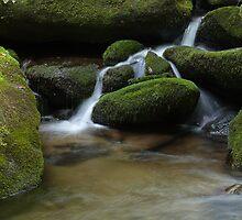 Blanket of Moss by Sherri Hamilton