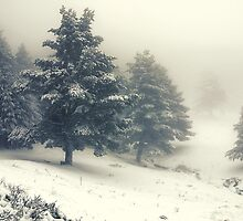 Winter by CarlaSophia