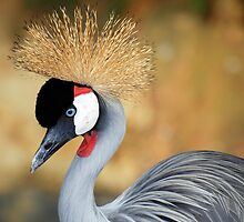 Black Crowned Crane by gromol