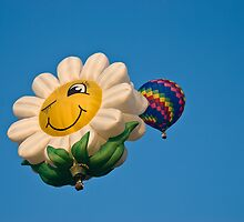 Happy Daisy by Charles Dobbs Photography