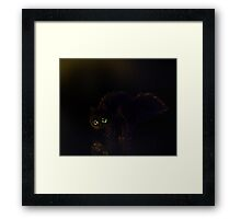 Black cat on a rainy night Framed Print