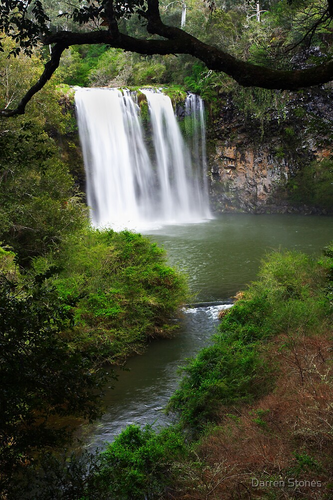 Dangar Falls at Dorrigo by Darren Stones