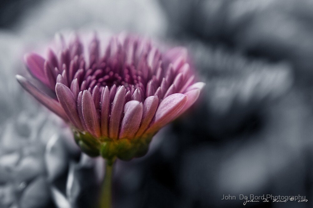 Memories of Romance by John  De Bord Photography