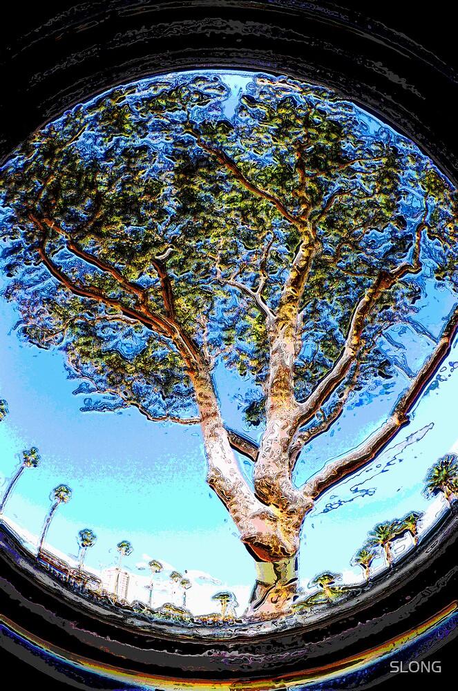 TREE CIRCLE by SLONG