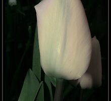 Mother Of Pearl by Jenni77