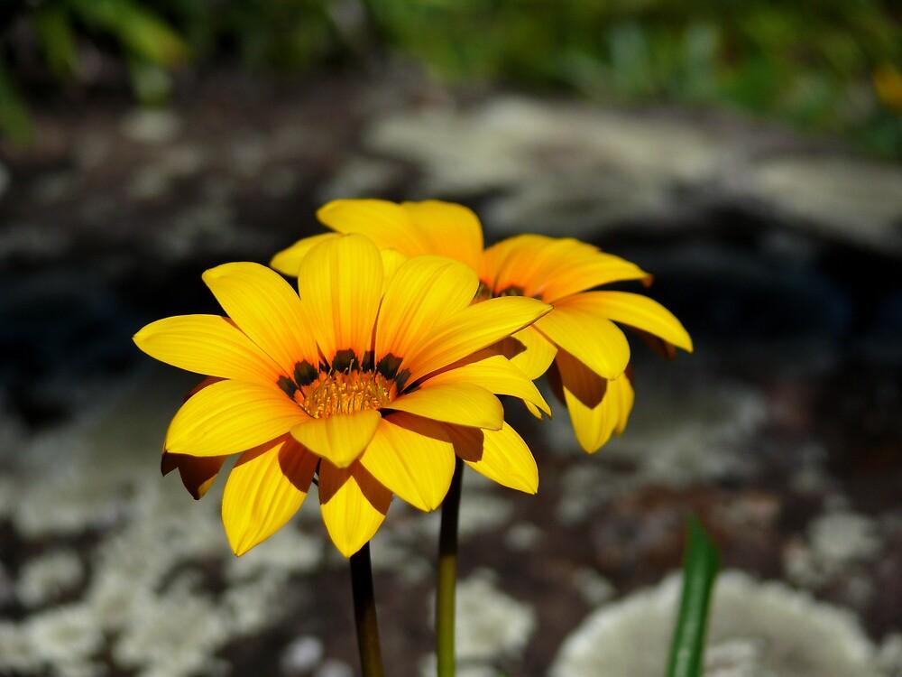 Reach for Sunshine by Josh Meggs