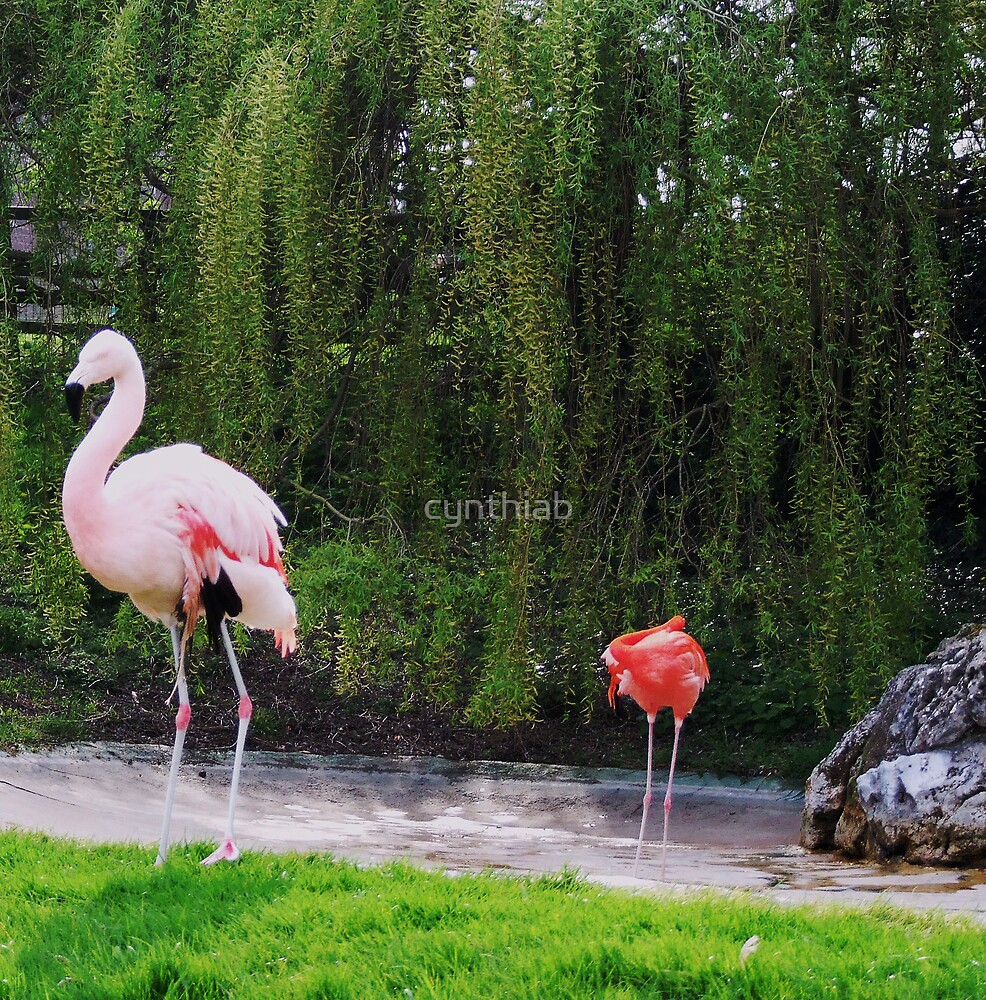 pink flamingos by cynthiab