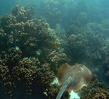 Gliding underwater by Stephanie Johnson
