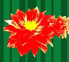 Red Dahlia by dilstudio