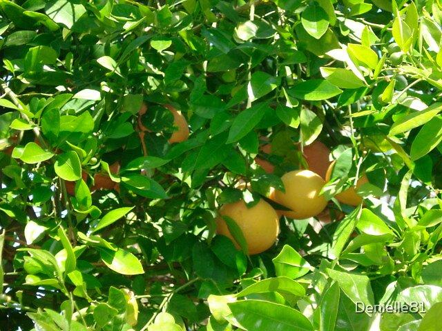 Arizona Grapefruit by Denielle81