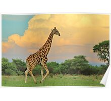 Giraffe - African Wildlife - The Rain is Coming Poster